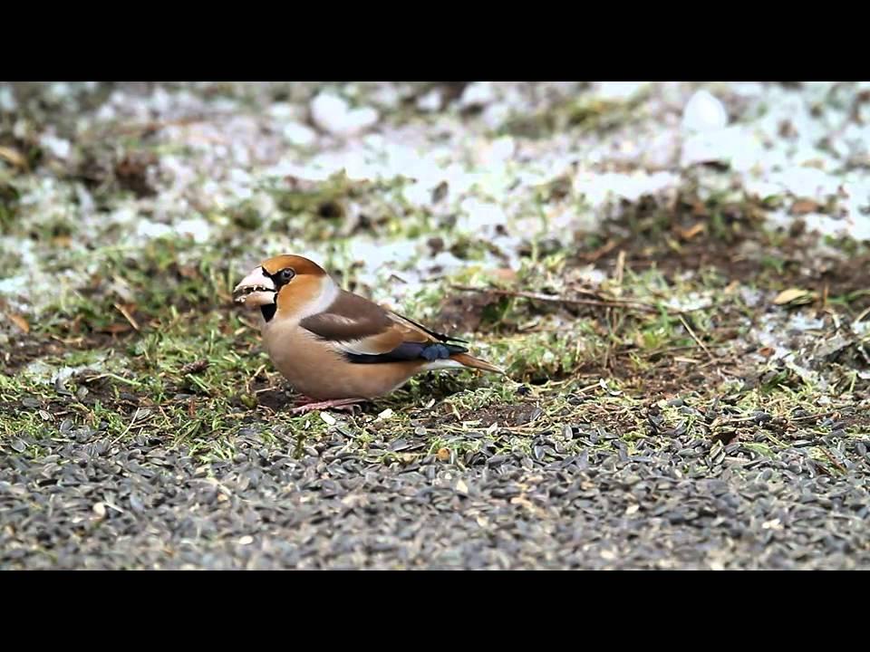 Finch társkereső oldal