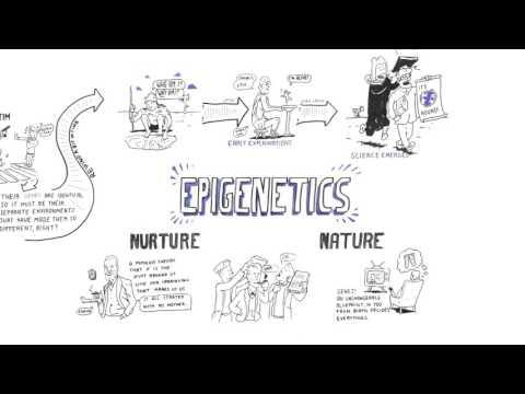 Epigenetics: Nature versus Nurture