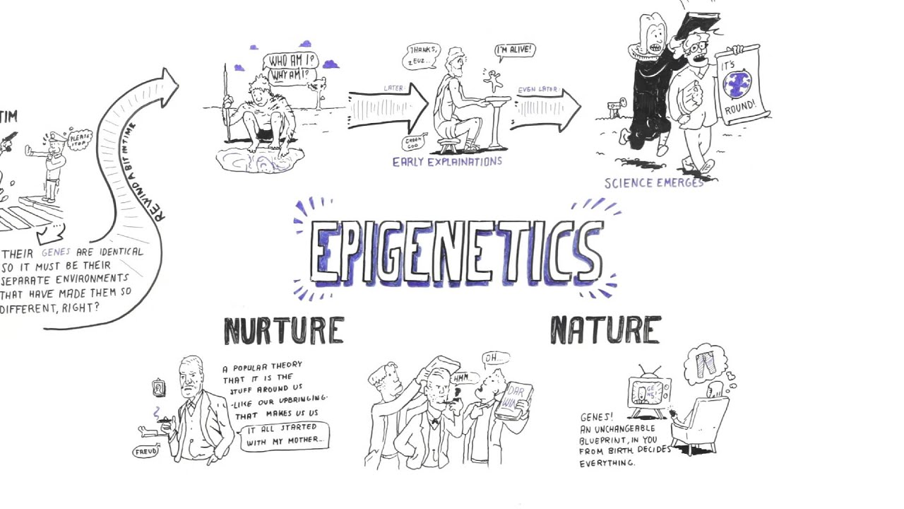 Nature Nurture Debate Essay Epigenetics Nature Vs Nurture Essay Vs  Epigenetics Nature Vs Nurture