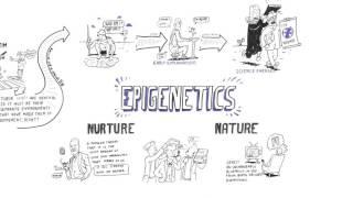 Epigenetics: Nature vs nurture