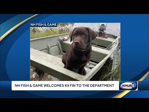 NH Fish And Game Welcomes K9 Fin To Department