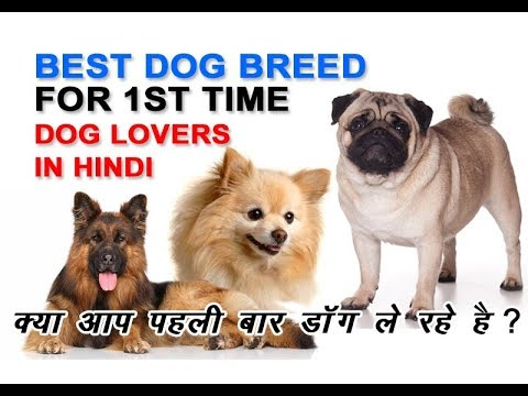 Top 4 Dog Breed For First Time dog Owner | Best Dog Breed for First Time Dog Owner