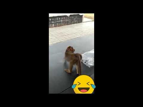 monkey farts| dog barking | funny video