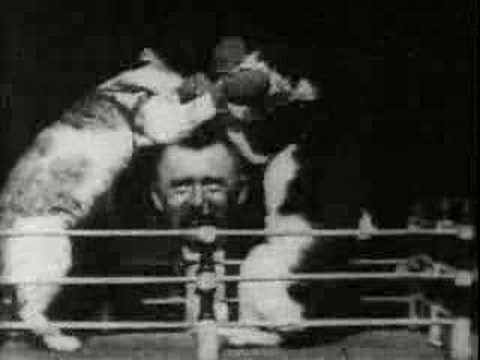 Thomas Edison - 1894 Boxing cats