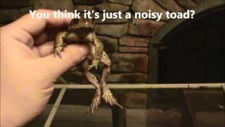 How To Make a Toad Giggle