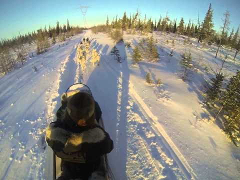 Dog sledding in the Arctic at Churchill Manitoba, Canada      #1 of 2