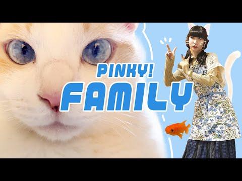 どうも! でんぱ組.incのピンキー!こと藤咲彩音です! 今回は、『ピンキー!の家族紹介』動画になっております。 そして、愛猫のカナル君の「...