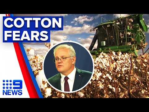 Aussie cotton growers targeted by China | 9 News Australia
