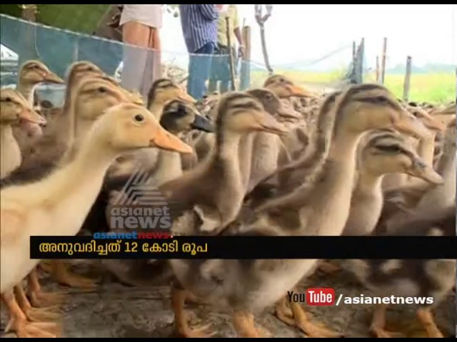 Bird flu compensation Rs11.94 cr sanctioned