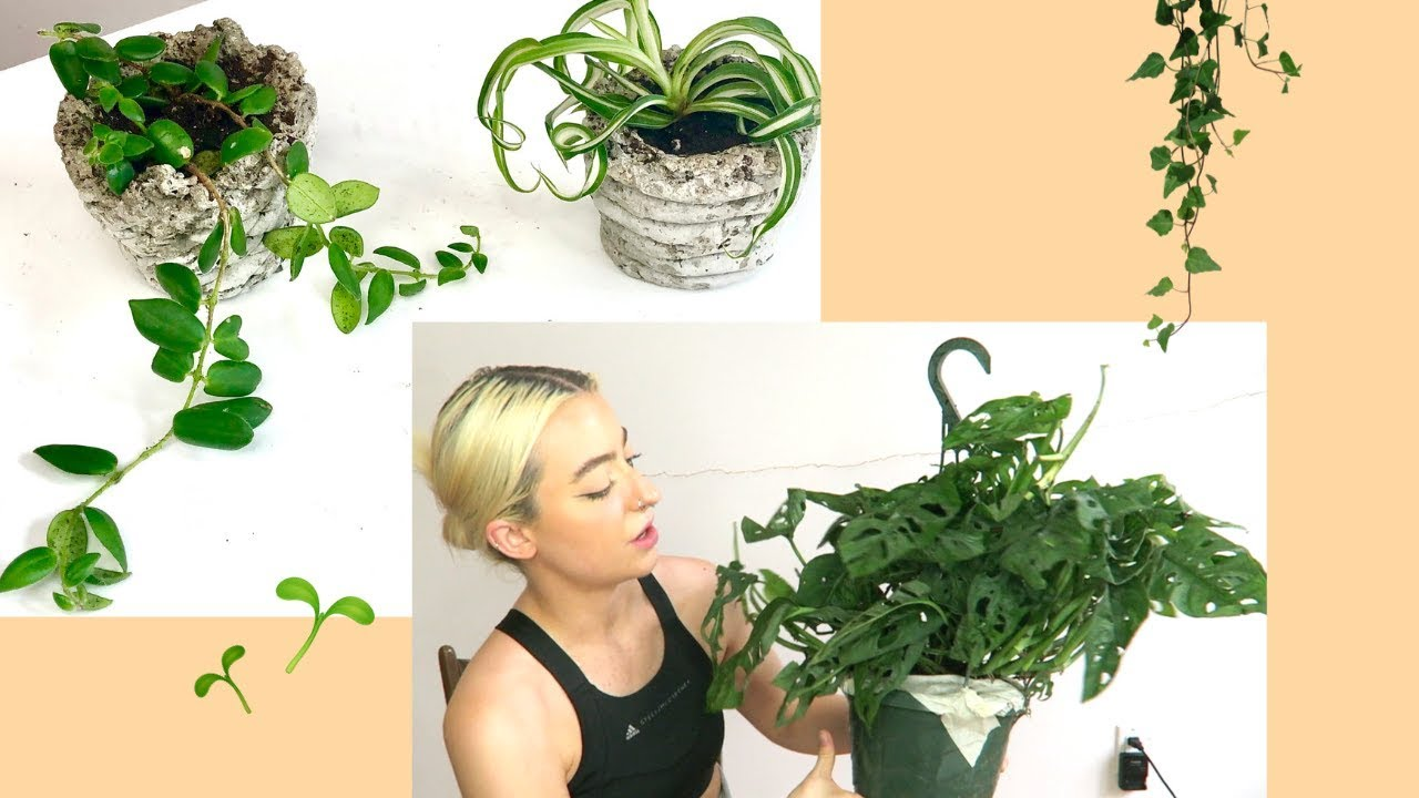Houseplant Haul Hirt S Gardens Etsy Cute Planters Youtube