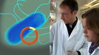 Jenny fragt: Wie funktioniert die Genübertragung mit Agrobakterien?