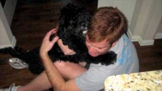 Owning a Portuguese Water Dog