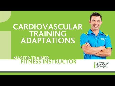 Cardiovascular Training Adaptations