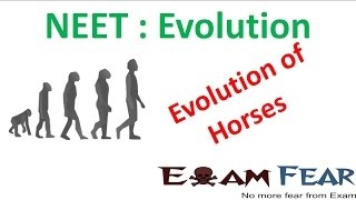 NEET Biology Evolution : Evolution of Horses