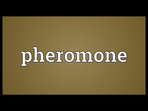 Pheromone Meaning