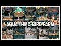 Top 10 Perkutut Ring Aqua Hmc Bird Farm Jernih(.mp3 .mp4) Mp3 - Mp4 Download