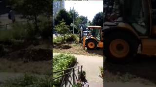 Очевидец: в Юбилейном безжалостно вырубают деревья