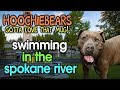 hoochiebears... swimming in the spokane river