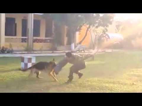 Vado Trại chó Bec giê Đức Trần Gia0904997476
