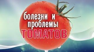 Болезни томатов и проблемы выращивания