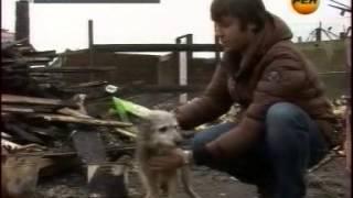 Живодеры сожгли приют для бездомных животных в Москве