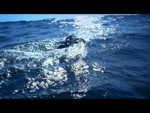 Navy SEAL Tharp Trains in Ocean