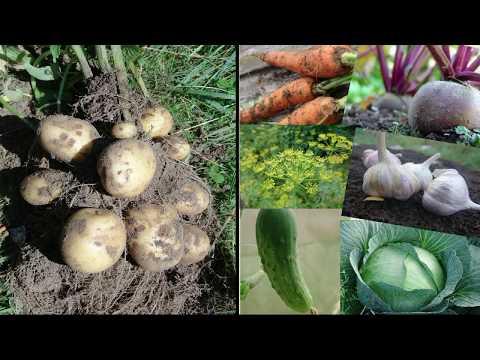 Севооборот картофеля