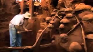 La citée souterraine des fourmis.