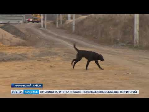 В Кузбассе задержали строительство дороги в обход Мариинска