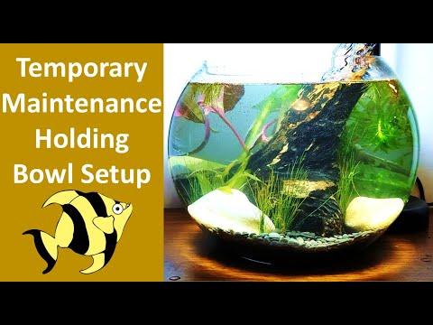 Betta Fish Bowl Aquarium Tank Setup.With Filter No Ferts No CO2. Part 1