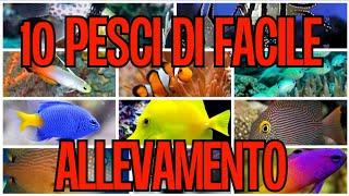 10 PESCI per PRINCIPIANTI  Acquario Marino