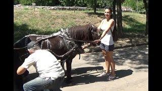 Животные: кенгуру, мунтжак, мара и придержала пони/Николаевский зоопарк