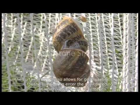 Professionally Specialized in Snail Business - Touchstone Snail Technologies LTD
