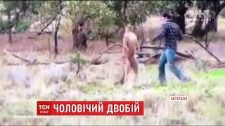 Мережу підірвало відео, на якому кенгуру побив пса та готовий був затіяти бійку із його господарем