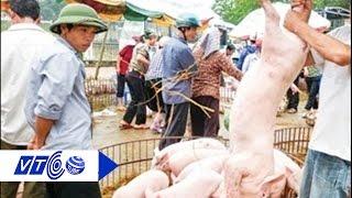 Việt Nam chưa được xuất khẩu thịt lợn sang Trung Quốc | VTC