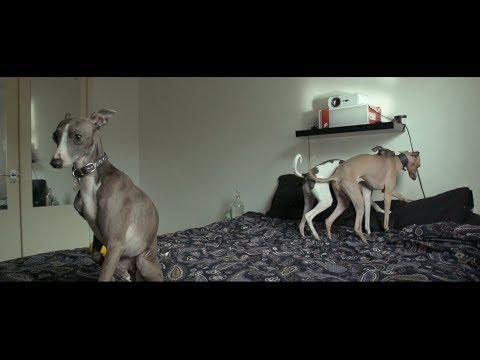 Majestic Minibeasts - The Italian Greyhound - Sony FS5