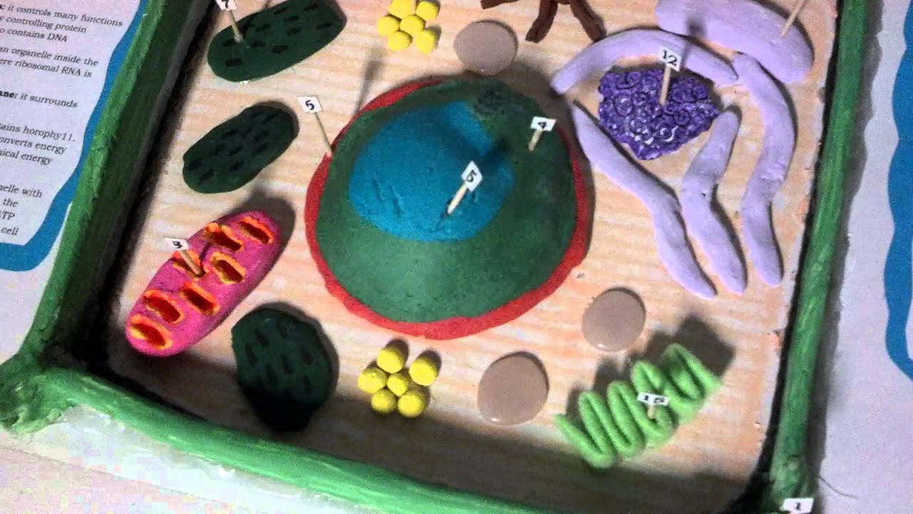 Little prowlers plant cell project - YouTube