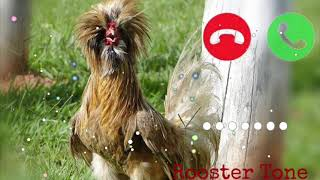 Cute sms ringtone, Notification Ringtone, Massage Ringtone, Viral Ringtone, Cute hen sms ringtone