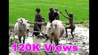 Video थारु सजना गीत २०७५ । खेत्वा सेक्लक दिन हर्दहवा खेल बेला। Tharu Sajana song 2075 download MP3, 3GP, MP4, WEBM, AVI, FLV Agustus 2018