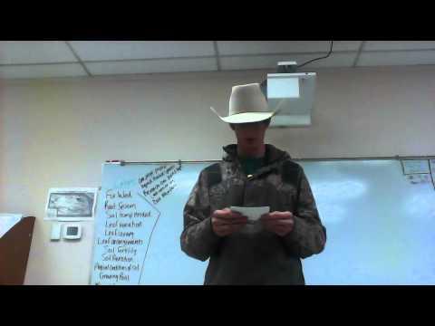 Regan Bader Informative speech #2 Branding livestock