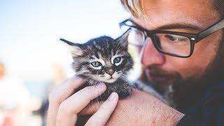 Чем домашние животные опасны для своих хозяев.