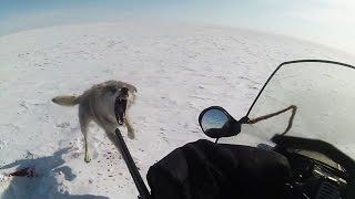ТРЕЙЛЕР Степные охотники 4 2, охота на волка (Wolf hunting)(трейлер фильма