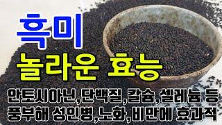 [#흑미효과] 흑미의 놀라운 효능 10가지 (안토시아닌…