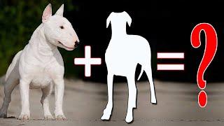8 Amazing Bull Terrier Mixes That Will Mel / Bull Terrier Cross Breeds