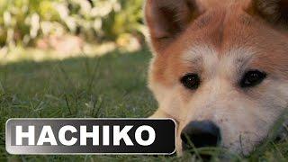 Hachiko: İngilizce Hikaye (Sadık Dost) Animasyon Alt Yazılı