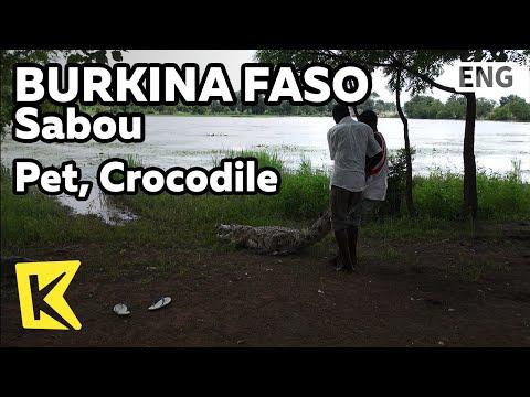 【K】Burkina Faso Travel-Sabou[부르키나파소 여행-사부]마을의 애완동물, 악어/Pet/Crocodile/Village/Lakeside