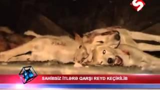 жестокое истребление собак--не для слабонервных!!!