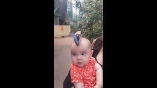 Butterfly jungle blue butterfly lands on baby
