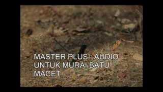 Gambar cover MASTER PLUS : AUDIO untuk mengatasi MURAI BATU MACET
