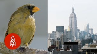 5 True Tales of Manhattan